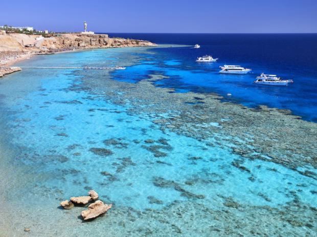 Турпром сообщает: число туристов на Красном море в июле превысило полмиллиона человек