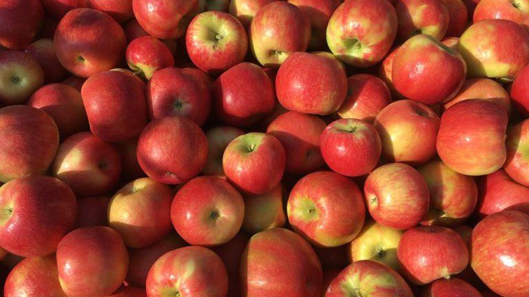 Фестиваль яблок в Каире