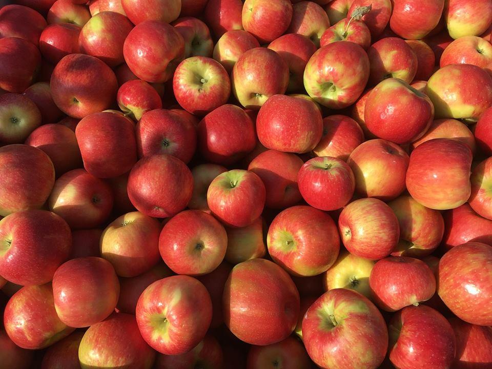В Каире прошел юбилейный 25-ый Фестиваль Яблочного урожая Apple Harvest Festival